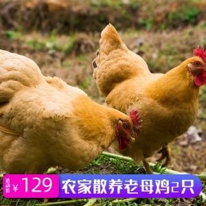 助农扶贫~我们在行动❤梦溪镇自家散养2019年老鸡(68元/只 129元/2只)